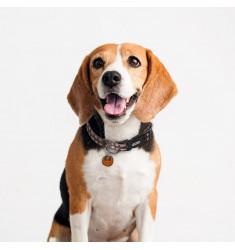 Star Wars Chewbacca Collar Perro