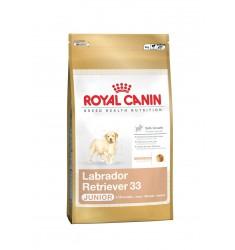 Pienso Royal Canin Labrador Retriver 33 Perro