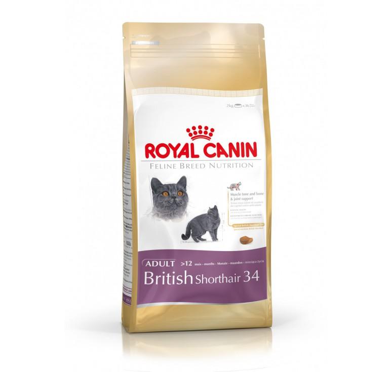 pienso royal canin british shorthair gato. Black Bedroom Furniture Sets. Home Design Ideas