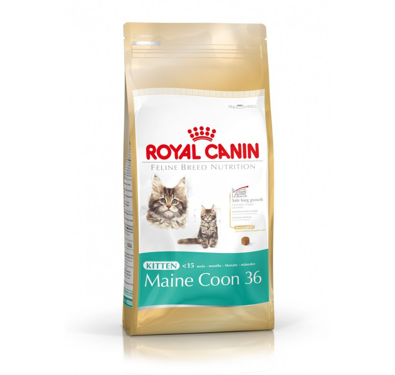 pienso royal canin kitten maine coon gato. Black Bedroom Furniture Sets. Home Design Ideas