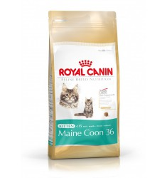 Pienso Royal Canin Kitten Maine Coon Gato